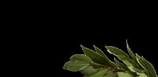 Eaux florales - B
