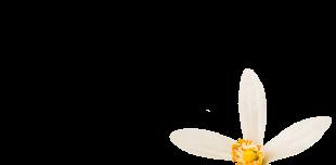Eaux florales - F