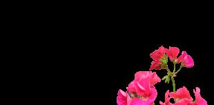 Eaux florales - G
