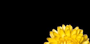 Eaux florales - H