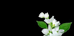 Eaux florales - J