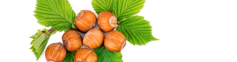 Tout savoir sur l'huile végétale de Noisette